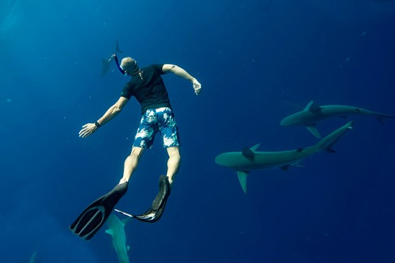 Riz_Boardshorts_Sharks_One_Ocean_Diving_John_Baran_post2