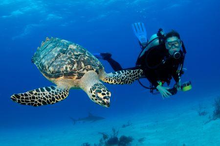 getting your padi scuba divers license