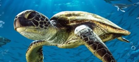 turtle-odyssey_showpageheader