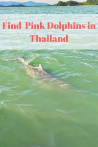 pink dolphins Thailand