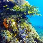 scuba diving coral reefs