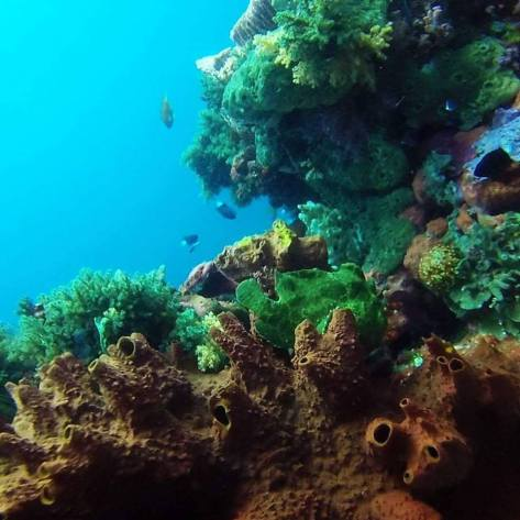 scuba diving with frogfish komodo national park