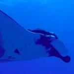 oceanic manta scsuba diving