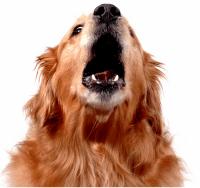 Barking-Dog-Report