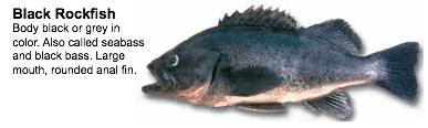 BlackRockfish