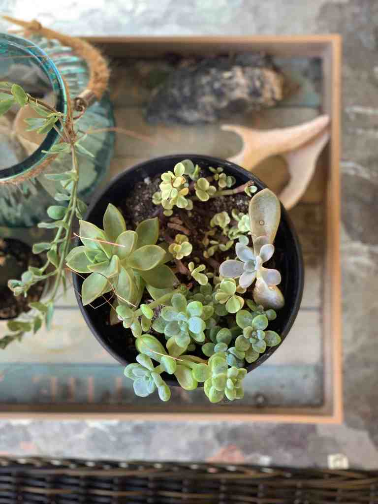 How To Create A Cozy and Inviting Outdoor Space In Any Size Space - Decor with succulents