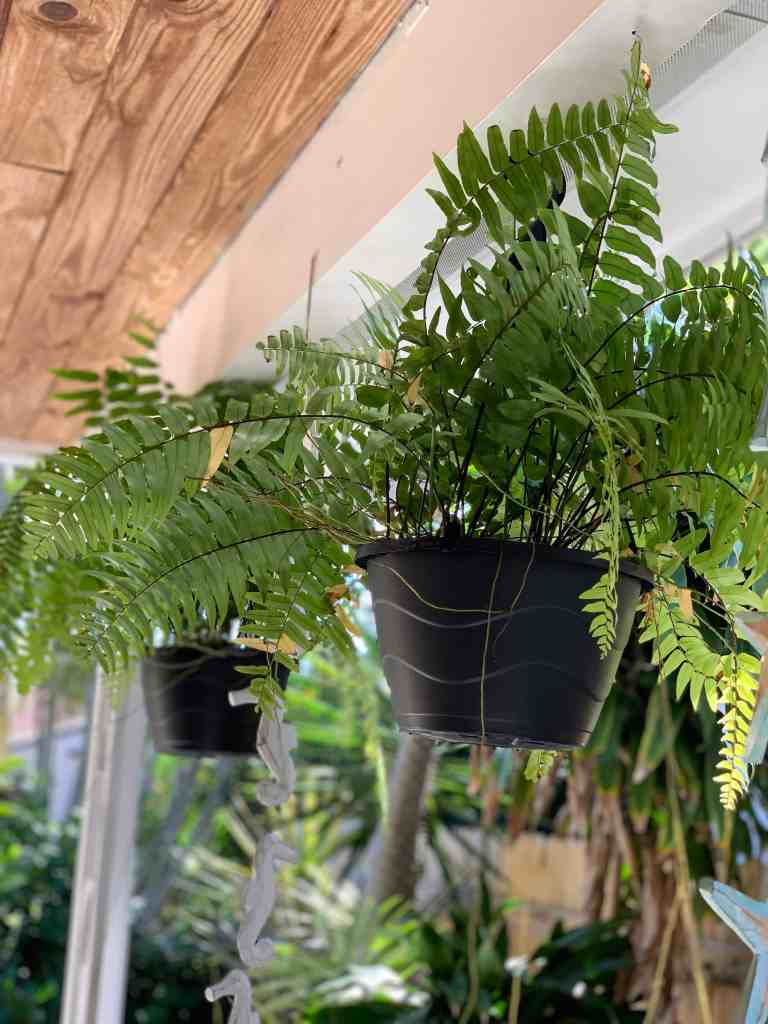 How To Create A Cozy and Inviting Outdoor Space In Any Size Space - Hanging Ferns
