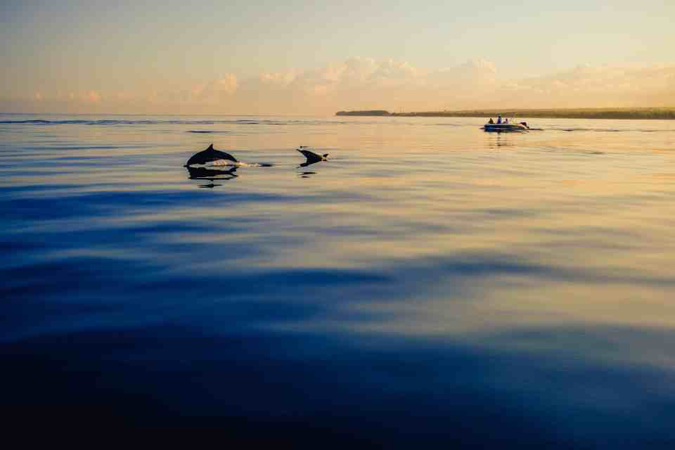 A guide to Key Largo, Florida - The most relaxing things to do in this tropical paradise in the Florida Keys!