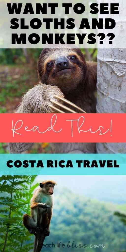 Sloths, Monkeys, Wildlife - Costa Rica Manuel Antonio, Costa Rica - Travel Guide, Itinerary, Excursion Ideas - Costa Rica Love!