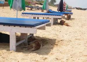 Dogs lying in the shade under beach beds and beach umbrellas