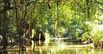 Mangrove River with lush green jungle surroundings in Takua Pa (ตะกั่วป่า) in Phang Nga Province.