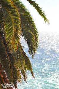 Palm tree covered in sun rays with the Pacific Ocean in the background