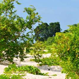 Green vegetation on a tropical beach of Selingan Island in Malaysia. Photo by Beachmeter.com.