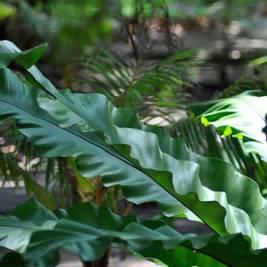 Green interior of Pulau Selingan (Turtle Island) in Borneo's Sulu Sea. Photo by Beachmeter.com.