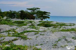 White sand beach with green vegetation at Turtle Island in Borneo. Photo by Beachmeter.com.