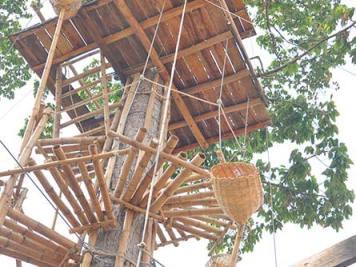 Spiral bamboo ladder around tree