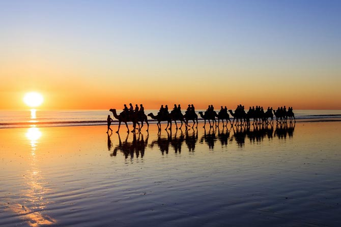 Camels walking in the beach sunset on the serene beach of Cable Beach, Western Australia. One of the world's best serene beaches.