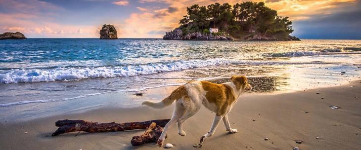 Dog walking on a Greek beach during sunset. Crete beaches.