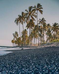 Hawaii black beach and palm trees