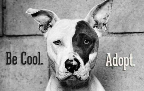 APR 30 ADOPT A SHELTER PET DAY  South Pacific County