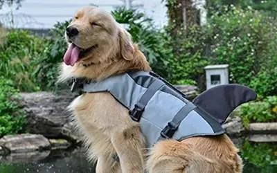 Shark Dog Lifejacket