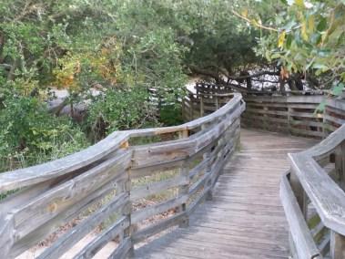 Va Beach First Landing State Park (21)
