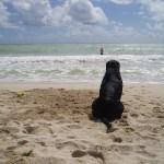 Lexi the lifeguard watching Shane swim