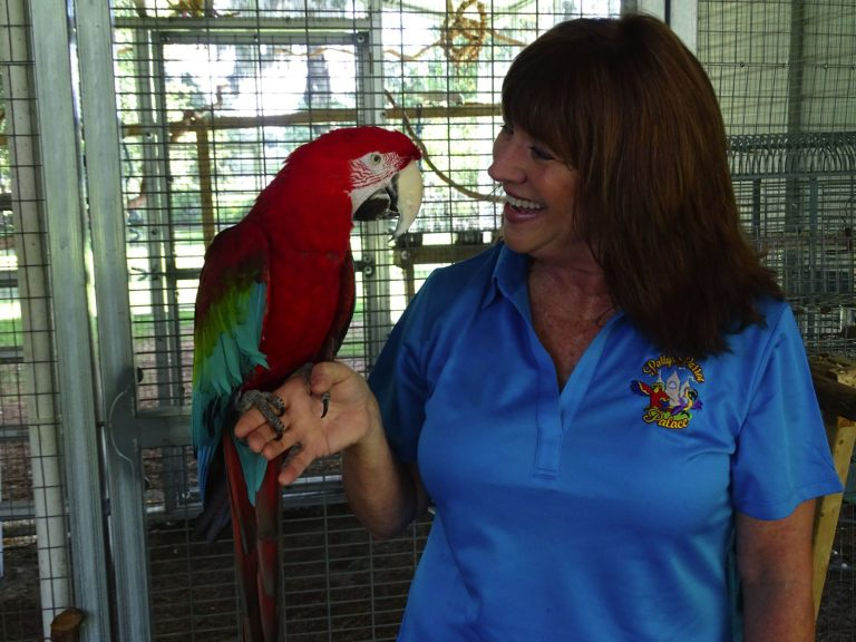 Safe at home in DeLand: Unwanted birds find permanent pleasure at Patty's Parrot Palace