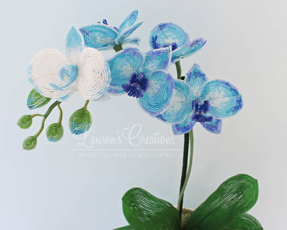 French Beaded Moth Orchid by Lauren Harpster