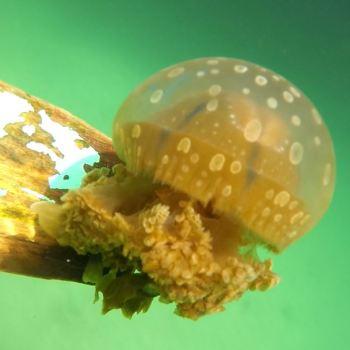 Jellyfish Sanctuary