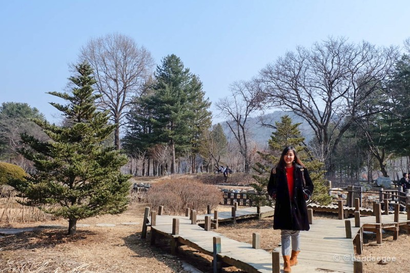 A girl in front of a park with many trees in Nami Island