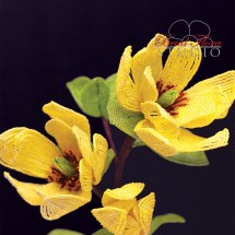 yellowmagnoliacmyk300dpi