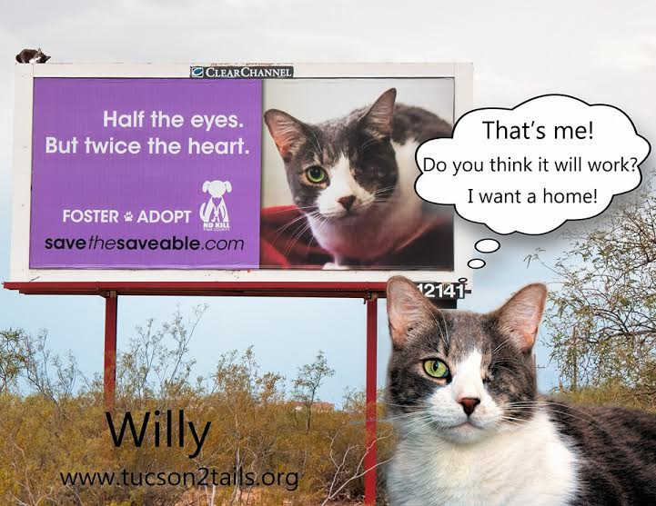 Adopt Willy - Tucson Tails