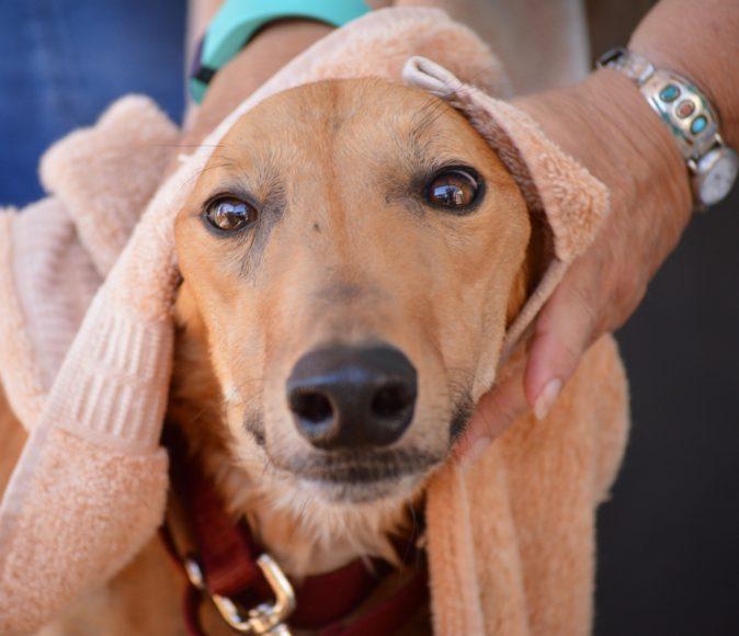 Tucson greyhound rescue