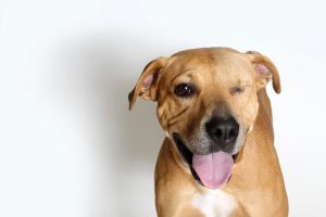 Tucson adoptable dogs