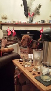 The cousins dog looking very confused by the game of Bagatelle
