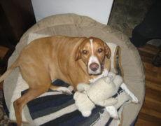 Bogle-Dog