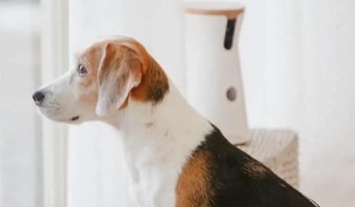 Beagle Camera