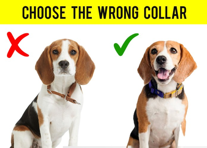 Choose the right dog collar