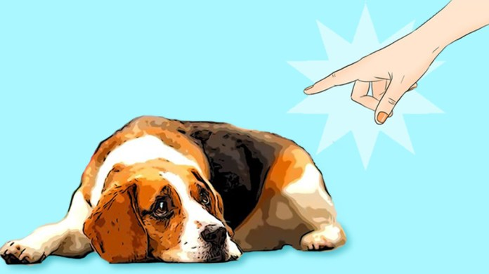 Harmful things that you do to your dog without knowing it