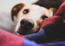 Why Old Dogs ​​are Awake at Night