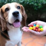 Common Household Items Toxic for Beagles