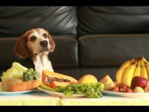 Are Fruits and Vegetables Good for Beagles