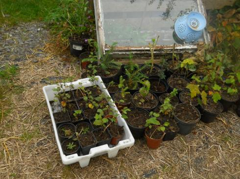 July permaculture 2011 008