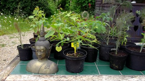 Bealtaine Cottage plant nursery