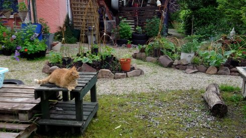 Missy and the potager garden Bealtaine Cottage