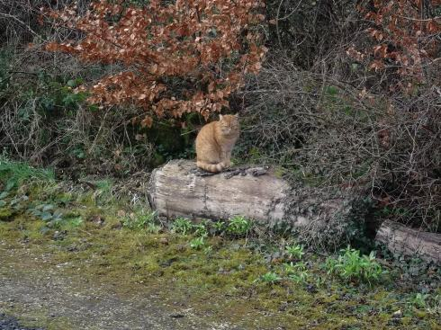 Missy Cat sitting on a log at Bealtaine Cottage