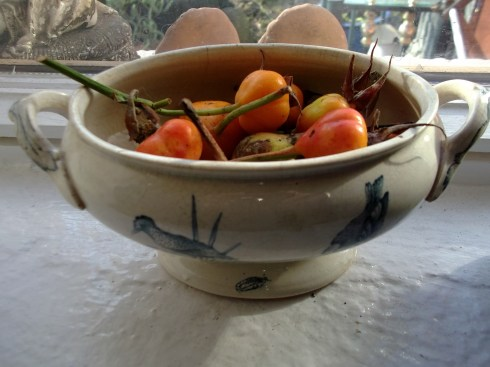 Rosehips in a bowl at Bealtaine Cottage