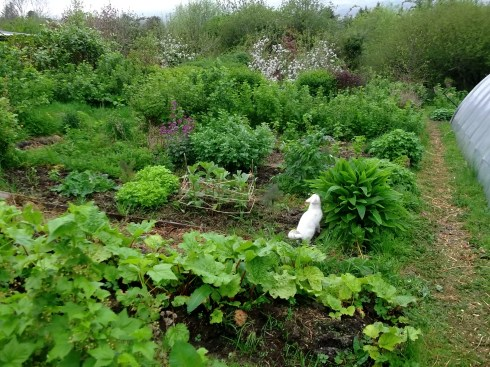 Permaculture Edible gardens of Bealtaine Cottage