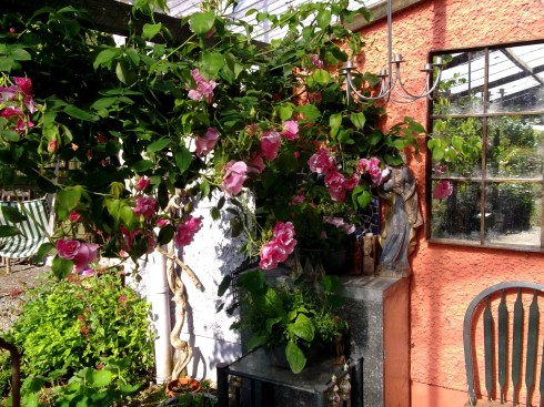 roses at bealtaine cottage Ireland June 2013